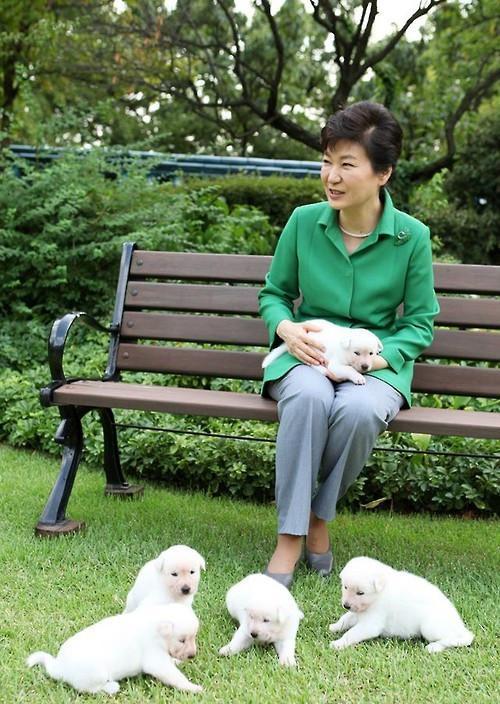朴槿惠爱犬离开青瓦台后 每天散步生活滋润(图)