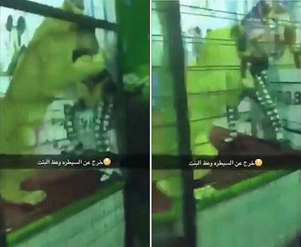 惊魂一刻!狮子与孩童玩耍时袭击一名小女孩