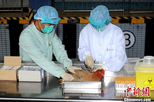 金沙娱乐官网网址:农业部:强化家禽H7N9流感免疫等综合防治措施