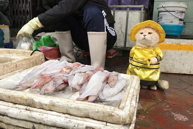 """最萌""""鱼贩""""!越南喵星人身着帝王装霸气看守海鲜摊位"""
