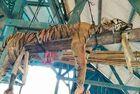 老虎被刺死掏空后吊起