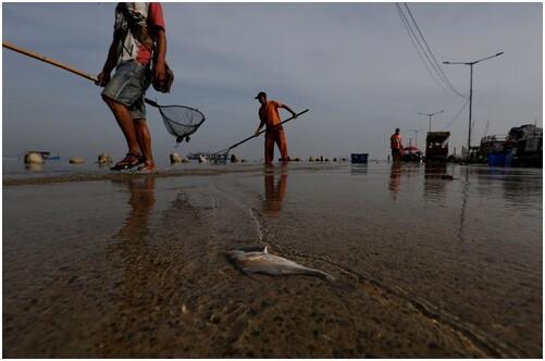 外媒:海岸線下降威脅印度尼西亞沿海居民生活