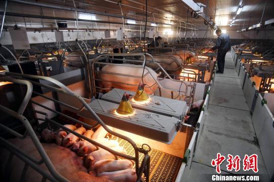"""政协委员支招化解""""猪周期"""":规模化养殖 大数据分析"""