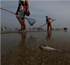 外媒:海岸线下降威胁印度尼西亚沿海居民生活