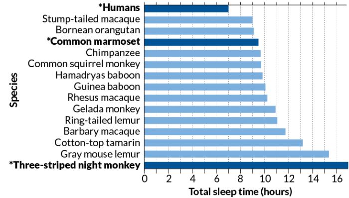 研究显示人类睡眠时间远低于其他灵长类