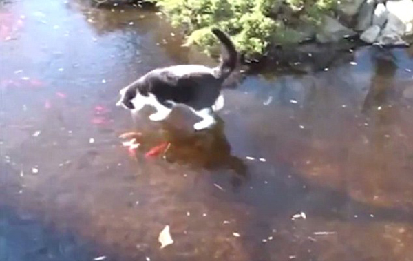 """猫咪在结冰池塘上试图捕鱼 上演""""花式滑冰"""""""