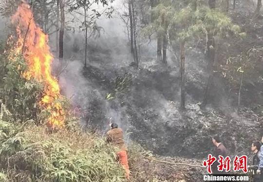 四川富顺村民烧田埂引发30余小时森林火灾被刑拘