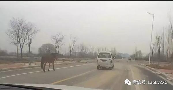 """郑州一男子边驾车边喝酒还""""遛马"""",涉嫌醉驾被刑事拘留"""