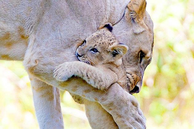 感人肺腑!动物王国母爱洋溢瞬间