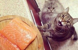 请问你家缺宠物吗,好吃懒做那种