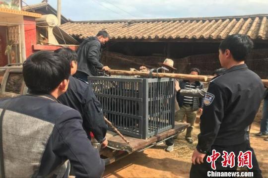 云南一村民误把黑熊当狗养了3年 发现后被没收
