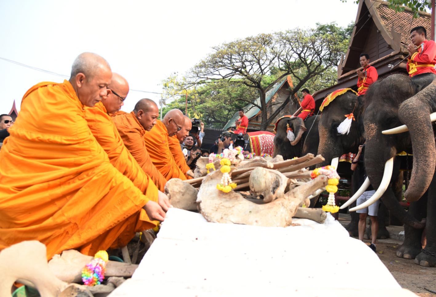 泰国迎接国家大象日 大象沐浴享受美食