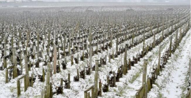 波尔多2017年红酒销量不佳 忧英国脱欧影响出口