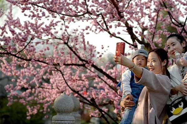 春暖花开竞芳菲