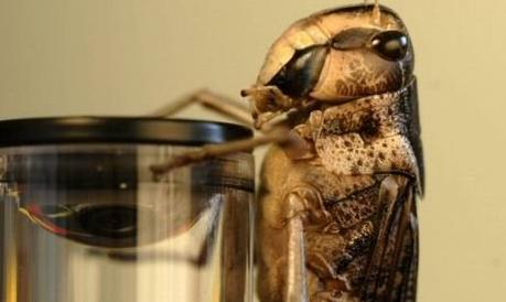 无人驾驶中的新型防碰撞技术灵感来自昆虫