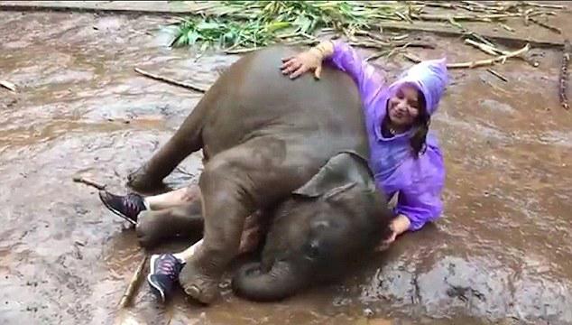 泰国一调皮小象撒娇打滚与女游客亲密接触