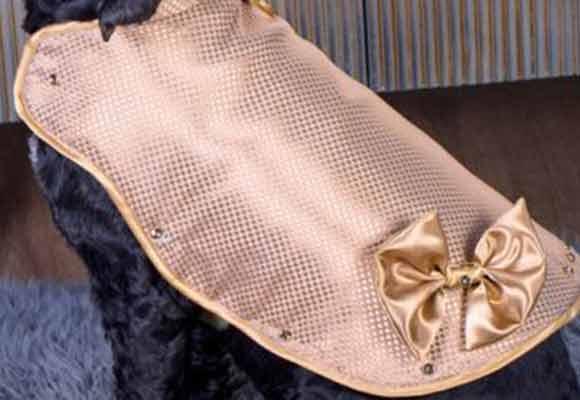 全球最贵狗狗外套 24K纯金打造价值882万元