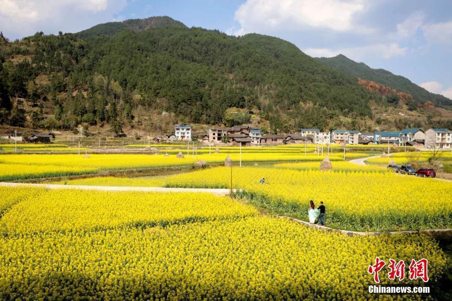 贵州施秉马溪千亩油菜花绽放美如画