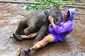 泰国调皮小象撒娇打滚与女游客亲密接触