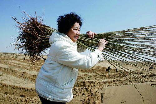"""""""大地妈妈""""易解放15年荒漠植树500万棵"""