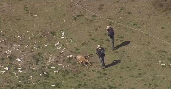 美农场现25匹饿死马匹 曾啃食铝合金撞碎玻璃门