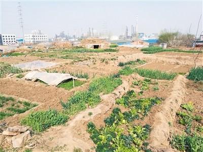建章宫遗址汉神明台成菜地 多处坍塌亟待保护(图)
