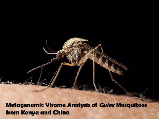 """中国蚊子和非洲蚊子谁更""""毒""""一些?携未知新病毒"""