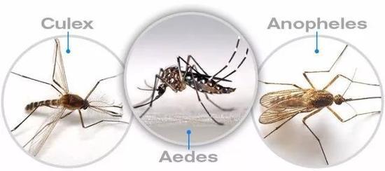 """中国蚊子和非洲蚊子谁更""""毒""""一些?"""