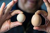 杭州大伯买到圆形鸡蛋 出现概率十亿分之一