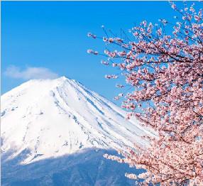 """一起去赏樱吧!日本全国最""""勤劳""""的樱花已经开啦"""
