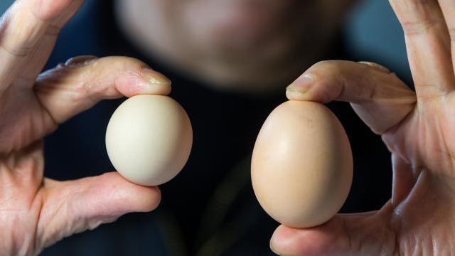 杭州大伯买到罕见圆形鸡蛋 出现概率十亿分之一