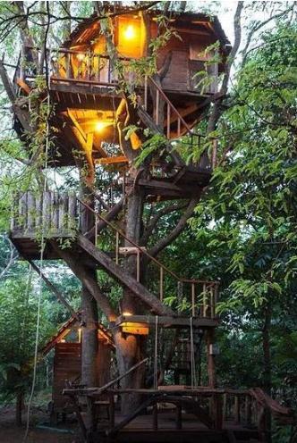 全球8间最美树屋