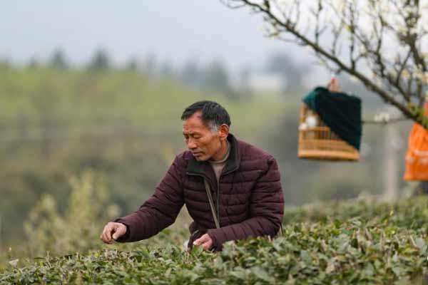 贵州丹寨 春分时节农事忙