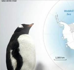 南极漂浮冰川体积超预期 引发海平面上升担忧