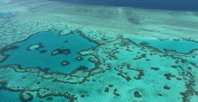 澳拟允许开放更多海洋公园进行商业捕鱼遭抨击