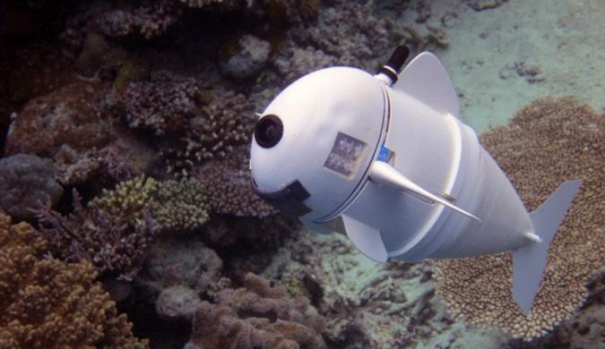 MIT研发的柔性机器鱼与真正的鱼群融为一体