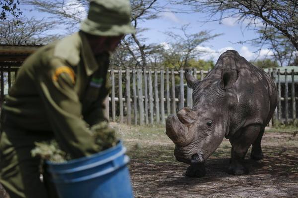 最后一头雄性北方白犀牛离世,对人类是一种警示