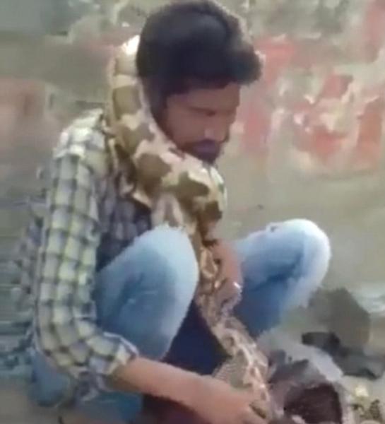 印耍蛇者遭巨蟒意外扼脖 观众以为仍是表演