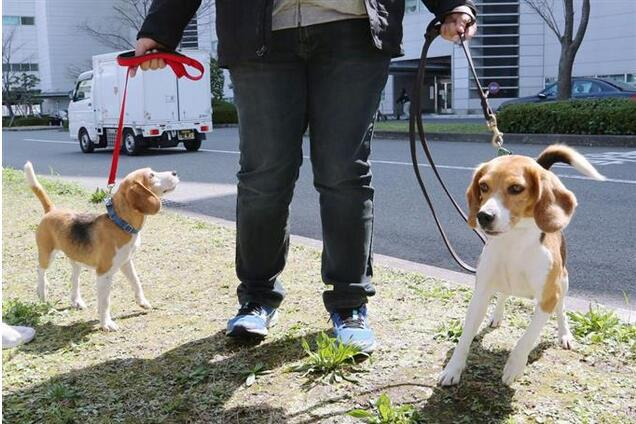 """又萌又厉害!日本请台湾红火蚁侦查犬做""""技术指导"""""""