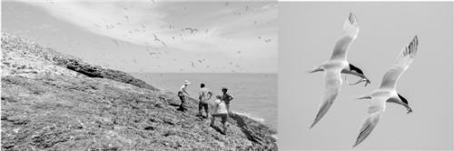 最有诗意临时工岗位招募:监测海鸟 日劳务费200元