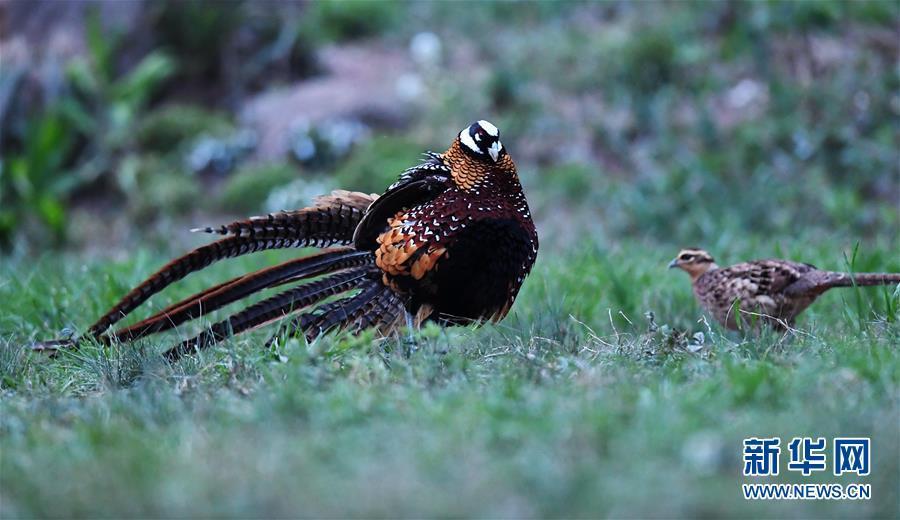董寨国家级自然保护区进入观鸟黄金期