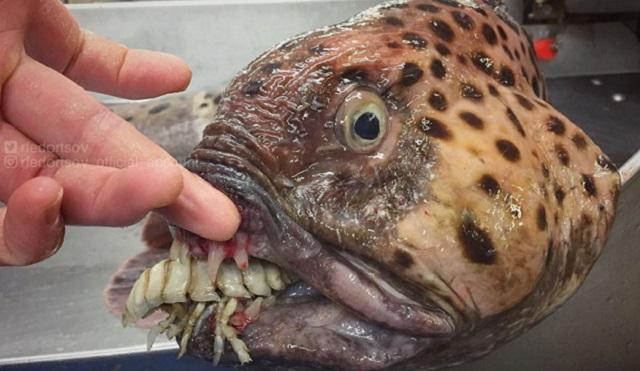 深海恐惧症莫入!这些海洋生物会让你做噩梦
