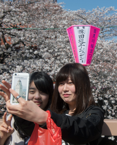 日本东京迎来?;?民众赏樱自拍