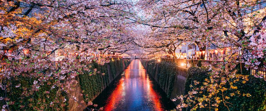 日本樱花季即将到来