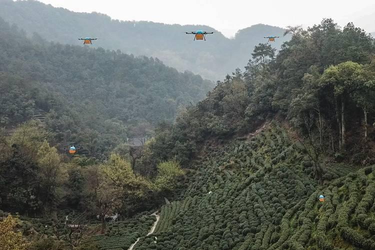 菜鸟技术赋能商家 狮峰龙井第一采由无人机运输