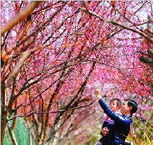 北京169处赏花片区翘首待客