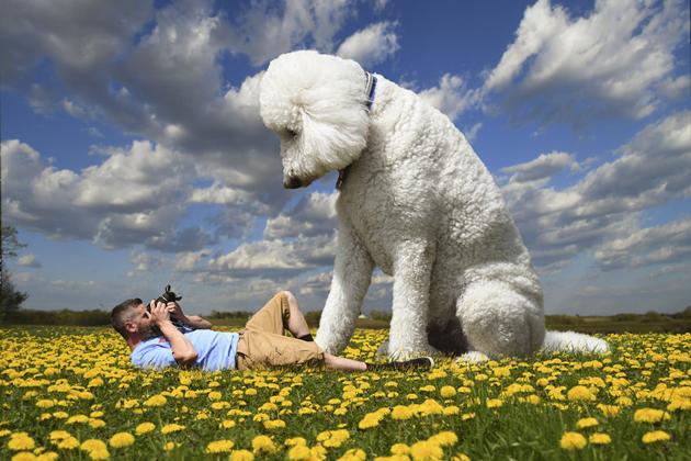 """美国狗狗被主人""""变""""成巨型犬 画风奇幻唯美像童话"""