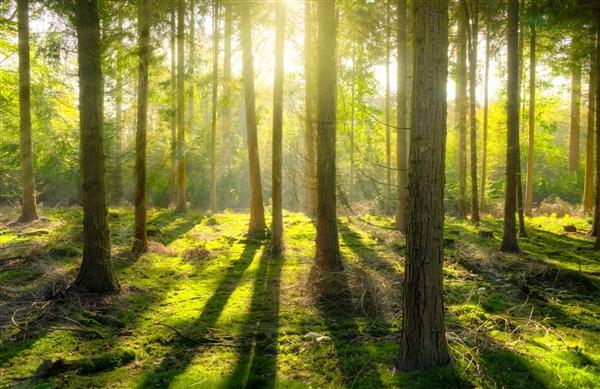 葡萄牙最古老森林遭焚毁 志愿者计划种2200万颗树