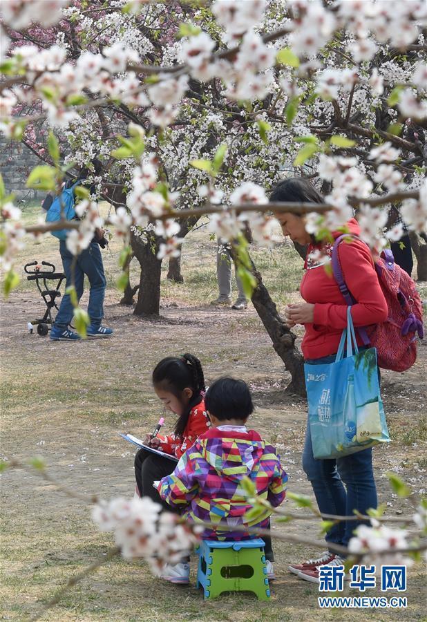 京城赏花正当时
