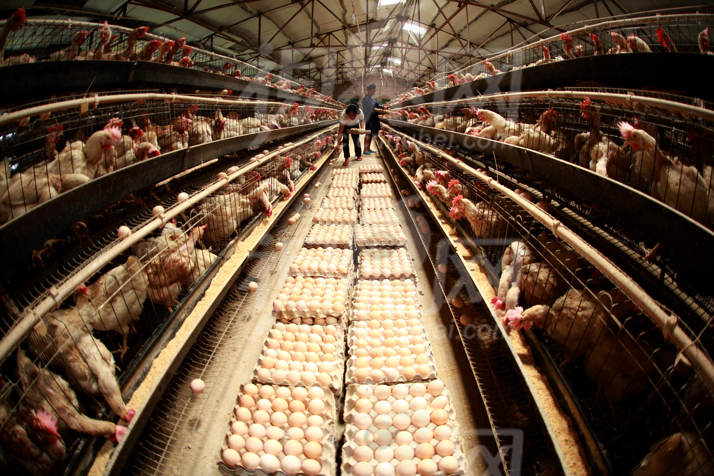 新三板养殖业再现行业性下滑